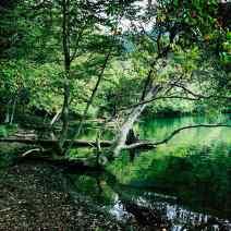 Yumoto, Ballade en forêt