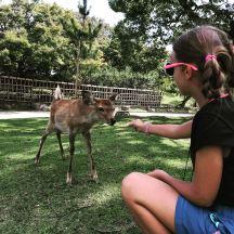 Comment apprivoiser un bébé daim ? - Eden à Nara