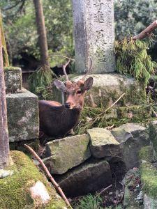 Jeu de cache cache au milieu des lanternes de pierres du sanctuaire Kasuga - Nara