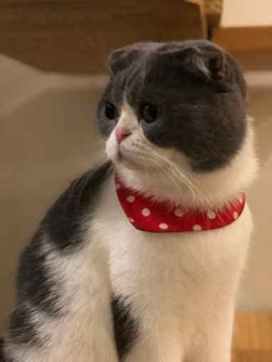 Notre Chat Chouchou