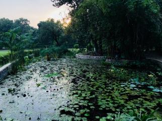 Jardin de nénuphars - Lodi Garden - Delhi - Inde