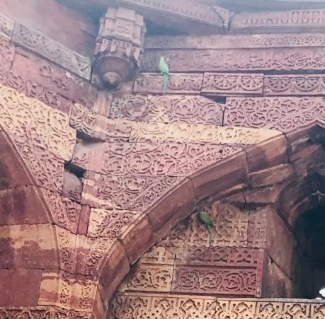 Des perroquets dans Delhi ! - Qutb Minar - Inde