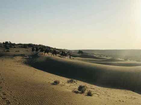 Quand la caravane passe...- Désert du Thar - Rajasthan - Inde