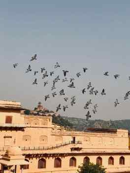 Vol d'oiseaux sur la cour du palais - Amber Palace - Rajasthan - Inde