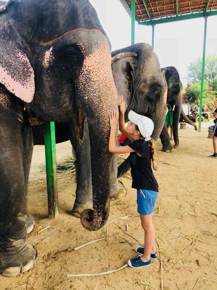 Je fais un calin à mon éléphante - Jaipur - Inde