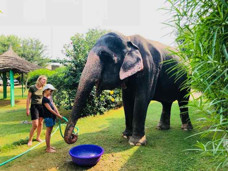 Je donne à boire à mon éléphante - Jaipur - Inde