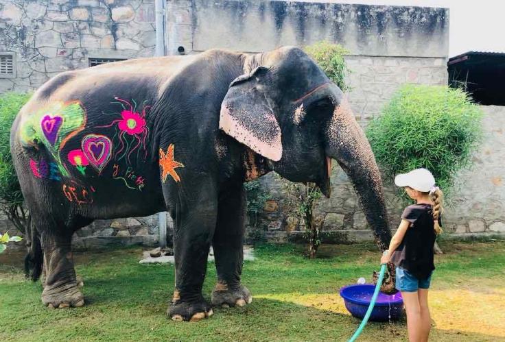 Eden donne à boire à l'éléphant - Elephantastic - Jaipur - Inde