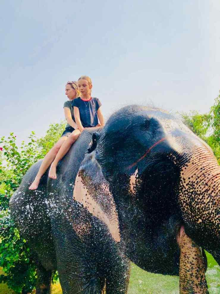 Après la douche, mon éléphante nous arrose ! - Jaipur - Inde
