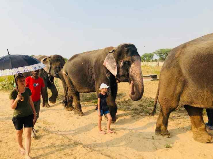 Promenade avec mon éléphante - Jaipur - Inde