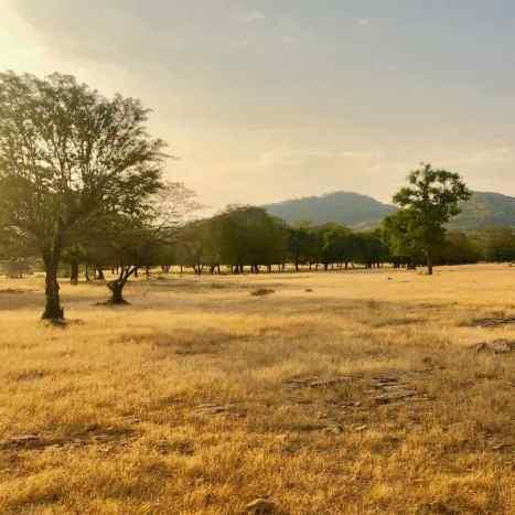 Ranthambore - Parc national - Rajasthan - Inde