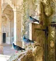 Pigeons alignés dans le Palais de Bundi - Rajasthan - Inde
