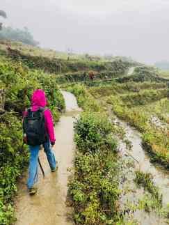 Rizières dans la brume - Région de Sapa - Vietnam