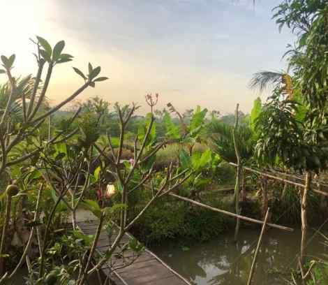 Petit pont pour rejoindre notre bungalow - Can Tho - Vietnam