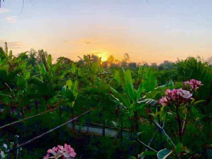 Lever de soleil depuis notre bungalow - Can Tho - Vietnam
