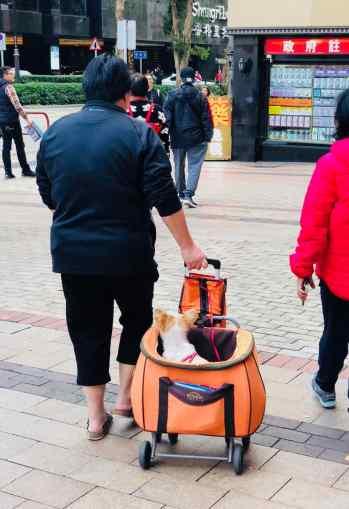 Panier à chien - Hong-Kong
