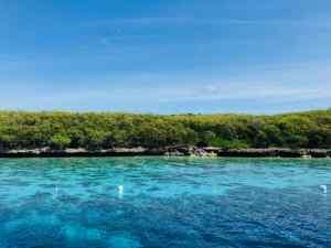 Jolis fonds coraliens près d'Oslob - Philippines