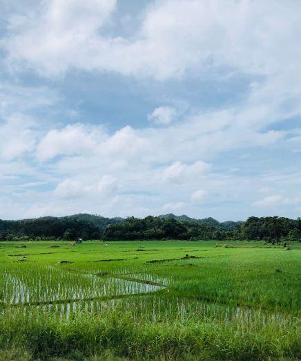 Rizières - Bohol - Philippines