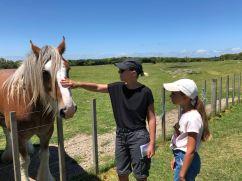 Hello le Cheval ! - Ambury Regional Park - Nouvelle-Zélande