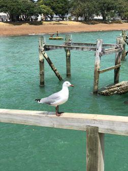 Mouette sur le ponton - Russel - Bay of Island - Nouvelle Zélande