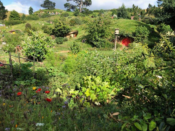 Vue générale sur la Comté - Hobbiton - Nouvelle-Zélande