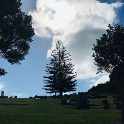 Pin typique de Nouvelle Zélande - Long Beach - Russel - Bay of Island