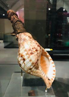 Coquillage- Corne de brume / instrument de musique - Musée d'Auckland - Nouvelle-Zélande