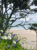 Vue depuis la balade menant à Cathedral Cove - Coromandel - Nouvelle-Zélande