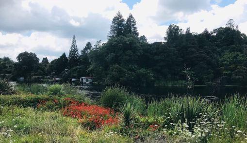 Végétation au bord de la rivière près des Okere Falls - Roturoa - Nouvelle-Zélande