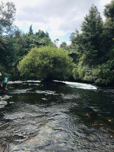 Arbre au milieu des eaux - Okere Falls - Roturoa - Nouvelle-Zélande