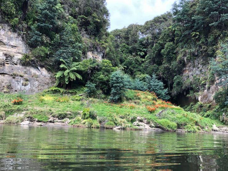Sur les rives - Whanganui River - Nouvelle-Zélande