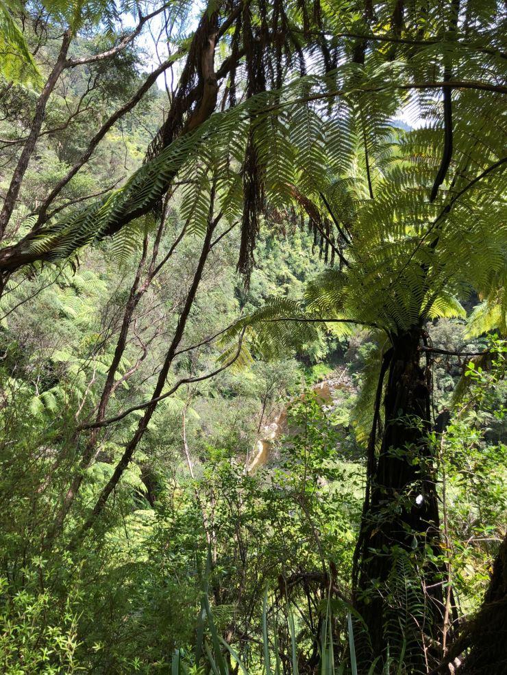 Végétation Néozélandaise - Whanganui River - Nouvelle-Zélande