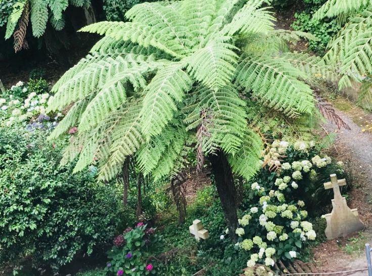 Cimetière derrière le jardin botanique - Tombe à l'ombre d'une fougère arborescente - Wellington - Nouvelle-Zélande