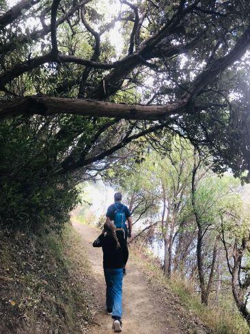 Vers Bob's Bay - Marche dans Queen Charlotte Sound - Picton - Nouvelle-Zélande