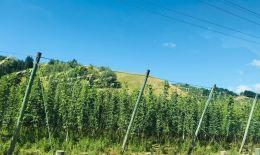 Vignes de Marlborough - Nouvelle-Zélande