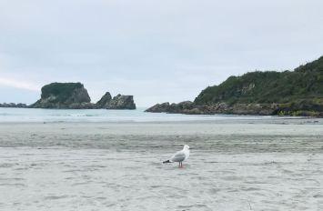 Mouette égarée - Environs de Westport - Nouvelle-Zélande