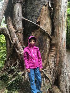 Gros gros arbre - Truman Track sous la pluie - Punakaiki - Nouvelle-Zélande