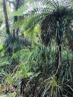Végétation luxuriante - Truman Track - Punakaiki - Nouvelle-Zélande