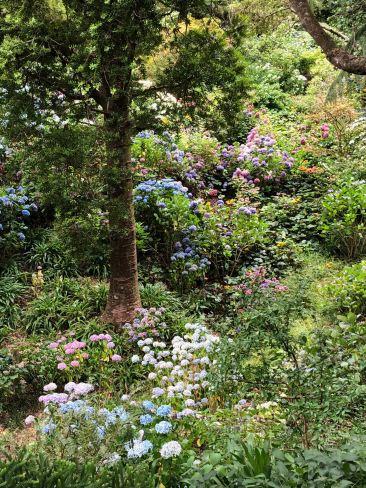 Jardin botanique - Wellington - Nouvelle-Zélande