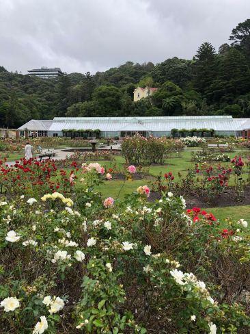 Roseraie du jardin botanique - Wellington - Nouvelle-Zélande