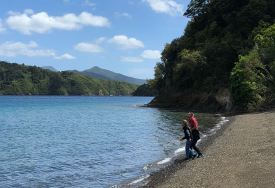 Bob's Bay - Picton - Nouvelle-Zélande