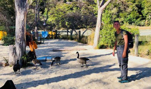 Tiens mais y'a du monde ici - Camping sauvage à Medlands Beach, avec les canards - Parc Abel Tasman - Nouvelle-Zélande