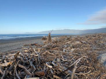 Bois flotté sur plage déserte - Westport - Nouvelle-Zélande