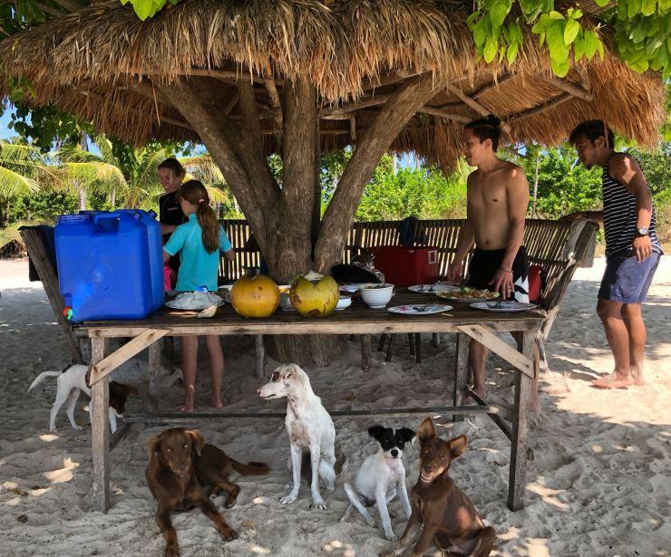 Préparation du repas avec les chiens de l'ile - Palawan - Philippines