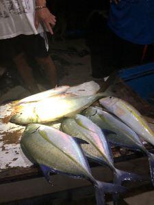 Poissons super frais ! - Retour de pêche - Palawan - Philippines
