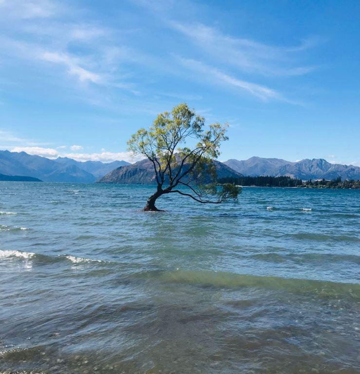 Le petit arbre symbole de Wanaka - Nouvelle-Zélande