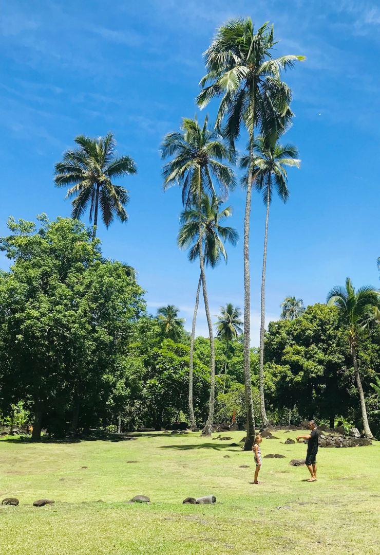 Palmiers géants - Marae Arahurahu - Tahiti - Polynésie