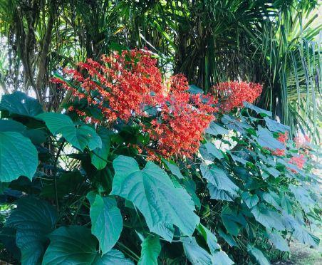 Arbre pagode - Jardin d'eau - Tahiti - Polynésie