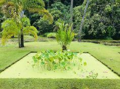 Bassin de lotus - Jardin d'eau - Tahiti - Polynésie