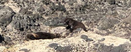 Phoques au soleil - Akaroa - Banks Peninsula - Nouvelle-Zélande