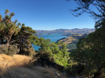 Vue sur la baie - Akaroa - Banks Peninsula - Nouvelle-Zélande
